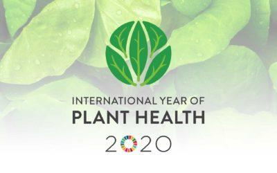 Il 2020 è l'anno internazionale del benessere delle piante!